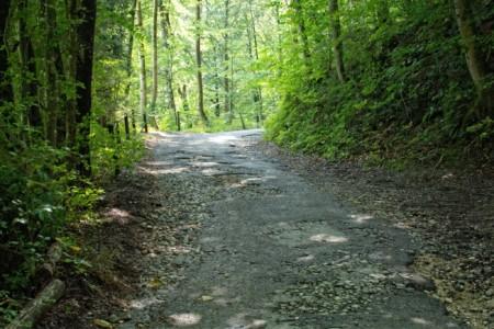 Zu sehe ist eine kaputte Straße, die durch einen Wald führt.